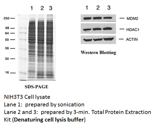 total protein extraction kit, animal cells, protein purification