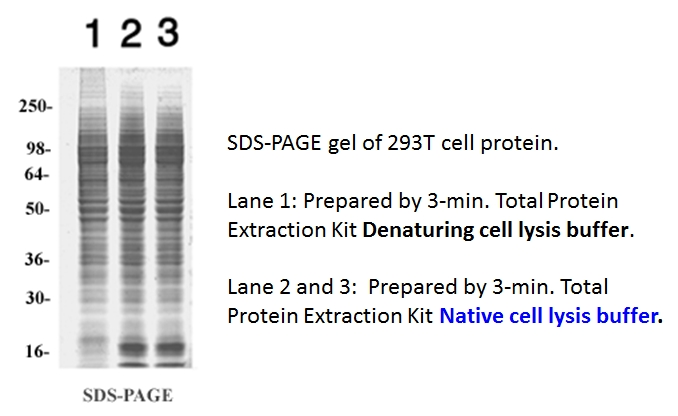 total protein extraction kit,animal cells, protein purification
