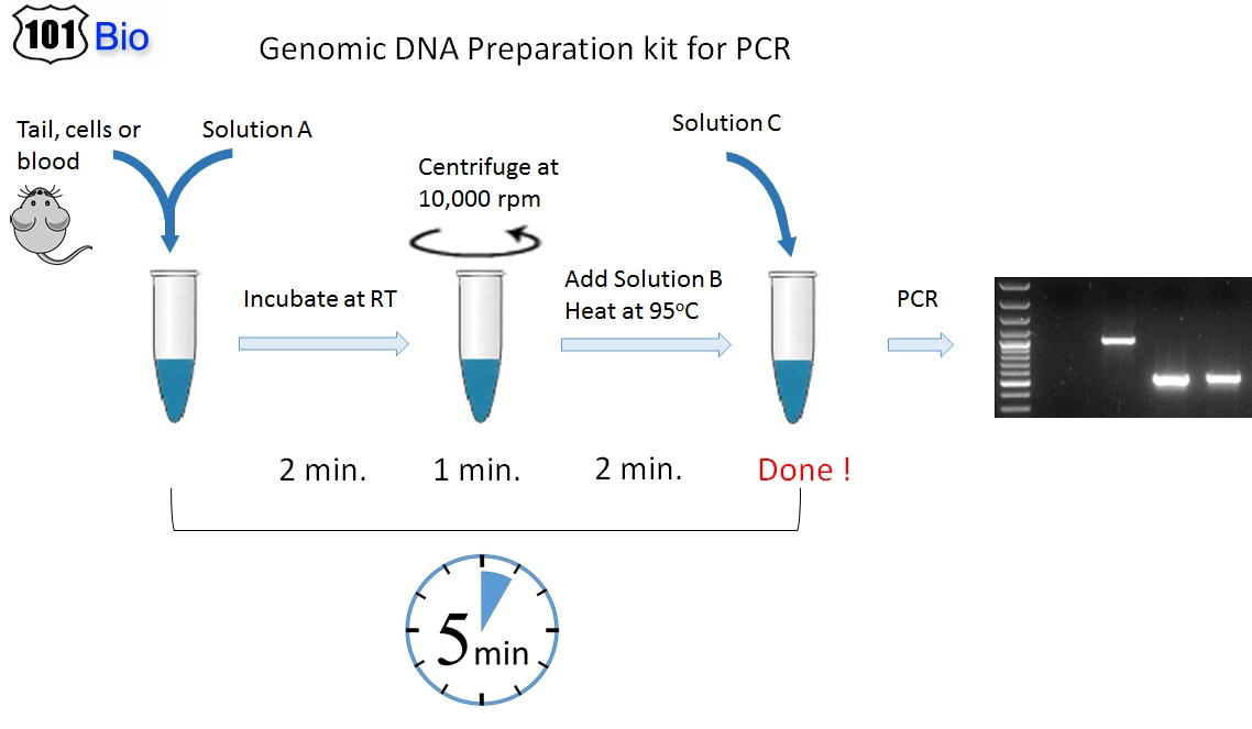 Plasmid Dna At Room Temperature Performance Of Dnastable