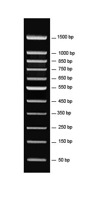50/100 bp DNA Ladder, 50 bp ~ 1,500 bp DNA ladder