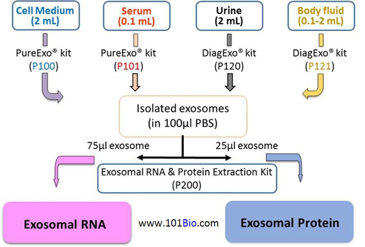 Exosome isolation kit, Exosome purification kit